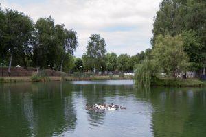 lago reale